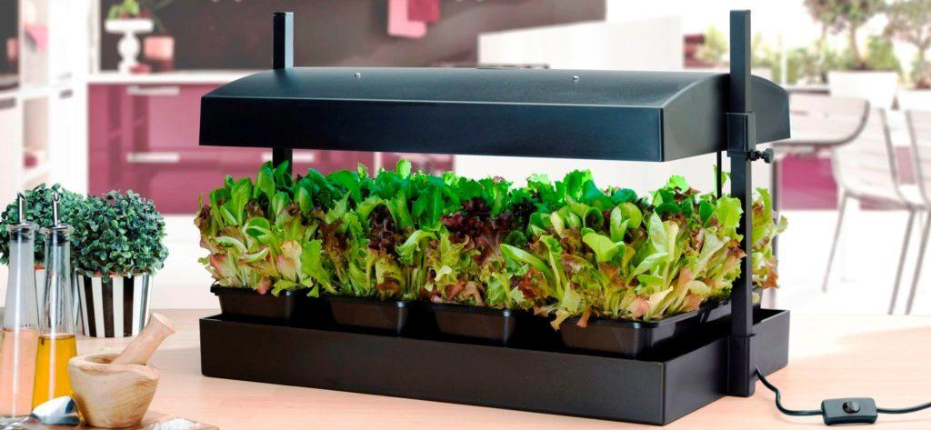 Indoor Farming with Growlight Gardens