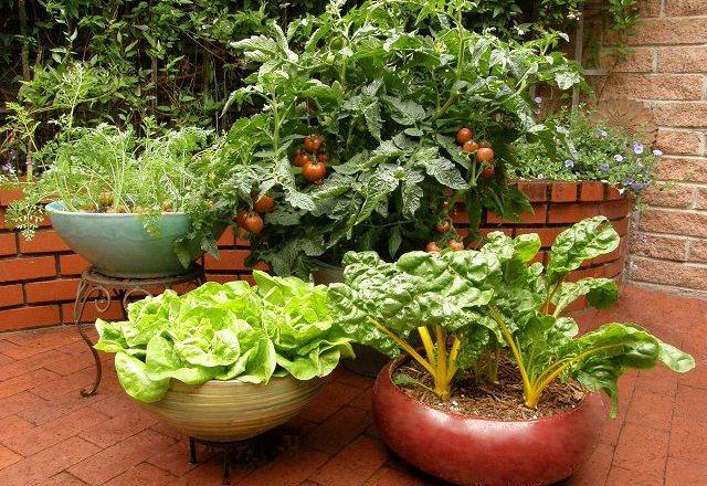 The Joy of Urban Gardening For Millennials