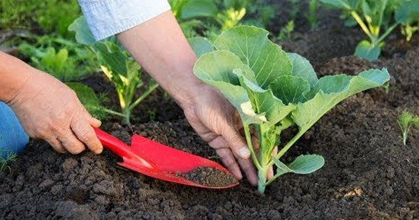 Why Use Organic Fertilizers for Growing Fruits & Vegetables