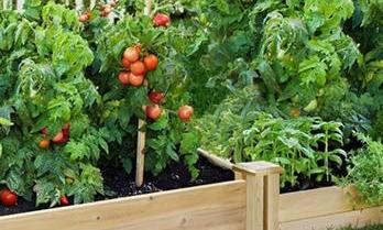 Some of the Easiest Vegetables to Grow in Raised Garden-Beds