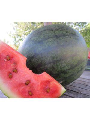 Organic Blacktail-Mountain Watermelon Seeds