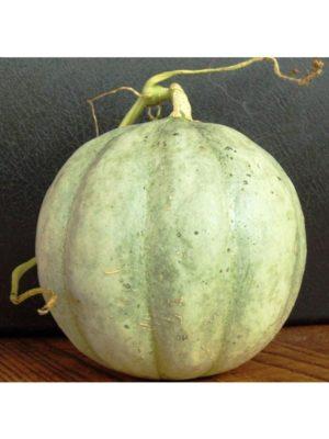 Organic French-Charentais-Cantaloupe Melon Seeds