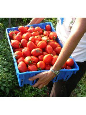 Organic Napoli-Paste Tomato Seeds
