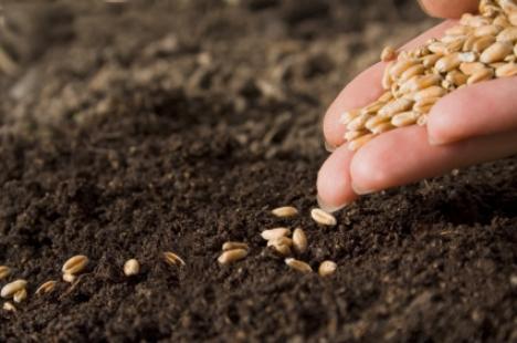 Why Use Organic Seeds