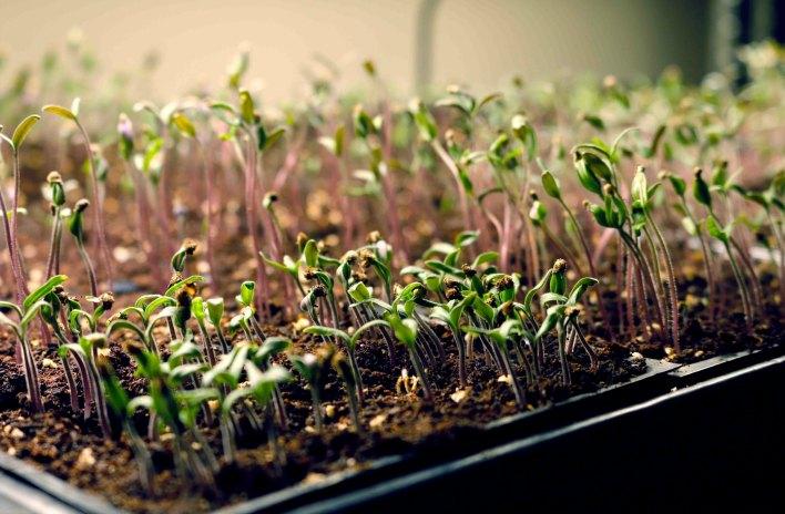 Seed Starting Using Growlights