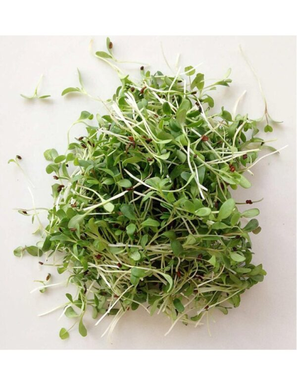 Organic Alfalfa Microgreen Seeds