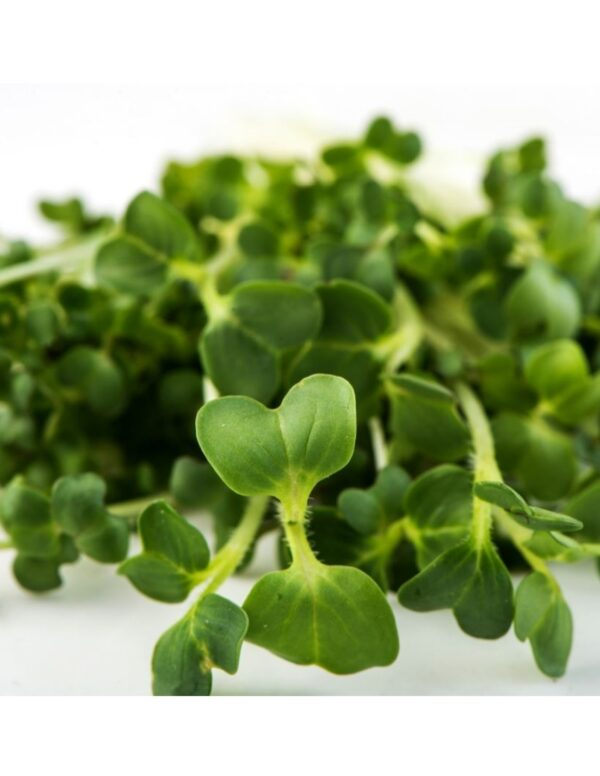 Organic Broccoli-Brassica Microgreen Seeds