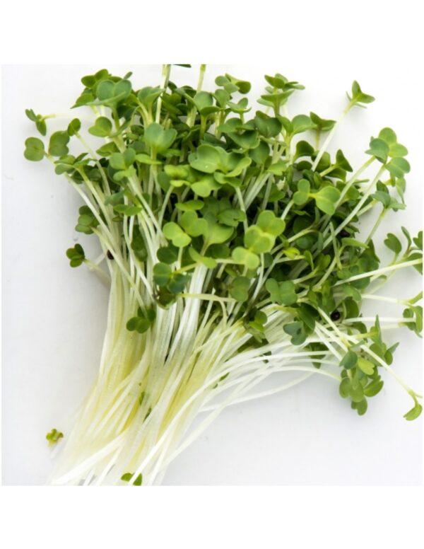 Organic Broccoli-Raab Microgreen Seeds