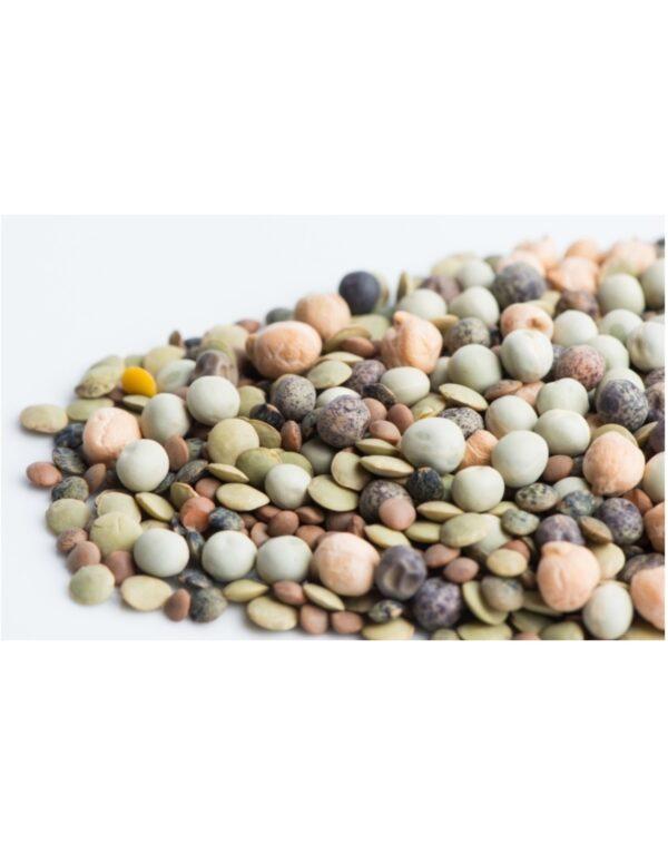 Organic Crunchy-Bean-Mix Sprouting Seeds