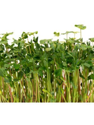Organic Salad-Mix Microgreen Seeds