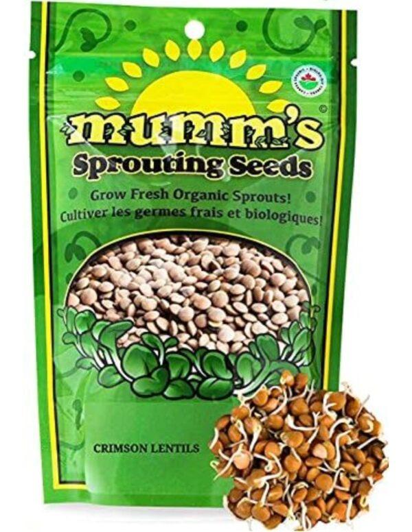 Organic Crimson-Lentil Sprouting Seeds