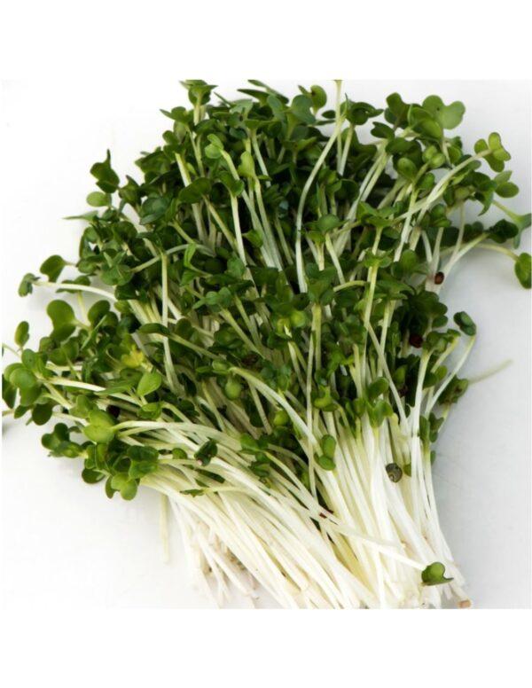 Organic Broccoli Microgreen Seeds