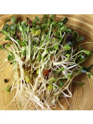Organic Sandwich-Booster Sprouting Seeds