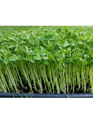 Organic Speckled-Peas Microgreen Seeds