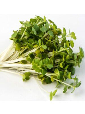 Organic Arugula Microgreen Seeds