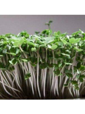 Organic Brown-Mustard Microgreen Seeds