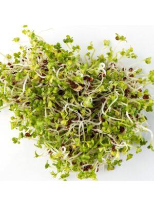Organic Brown-Mustard Sprouting Seeds