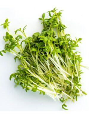 Organic Curly-Cress Microgreen Seeds