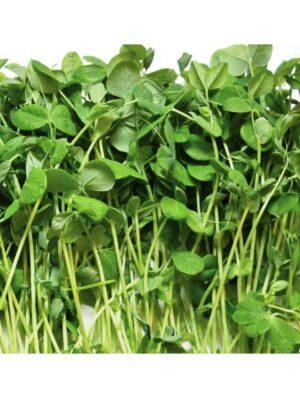 Organic Green-Peas Microgreen Seeds