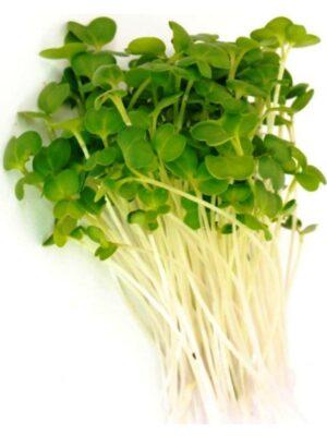 Organic Green-Kale Microgreen Seeds