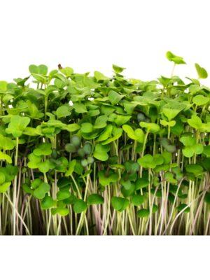 Organic Mellow-Microgreen Mix Seeds