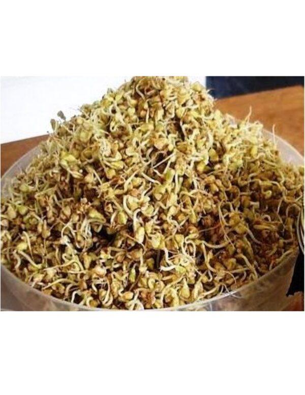 Organic Buckwheat Sprouting Seeds
